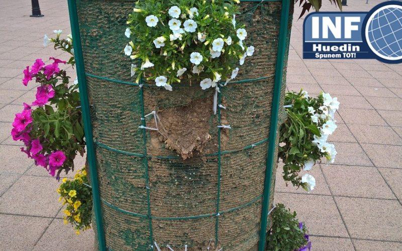 FOTO – Florile din centrul Huedinului dispar în fiecare zi