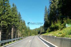 Cât material lemnos s-a furat anul trecut din pădurile administrate de ROMSILVA