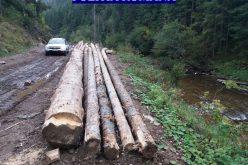 Material lemnos confiscat la Ciucea și Călățele