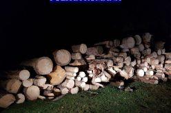 Lemne fără aviz, confiscate la Căpușu Mare
