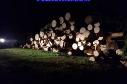 Polițiștii din Cluj-Napoca, confiscări de lemne pe zona Huedin