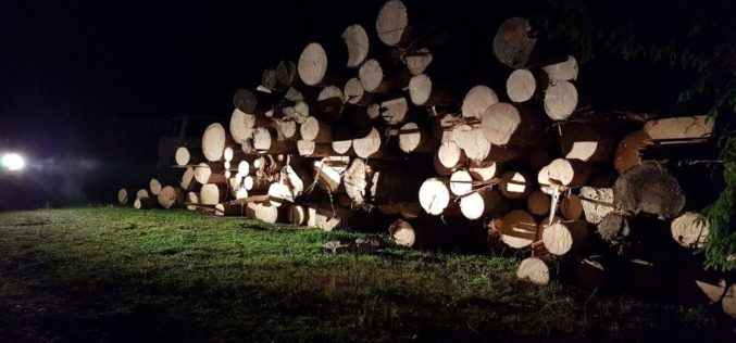 Amenzi în valoare de 10.000 de lei, lemne și mașină confiscate. S-a întâmplat în zona Huedin