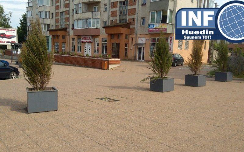 AUDIO – În loc să planteze tuia direct în pământ, Primăria Huedin a cheltuit o avere pentru jardiniere metalice în care se coc rădăcinile arborilor