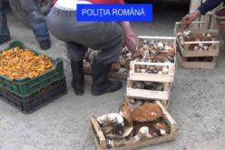 Fructe de pădure şi ciuperci confiscate la Măguri-Răcătău. Care a fost motivul