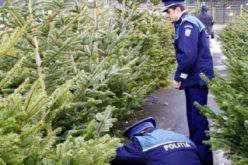 Bărbat din Măguri Răcătău, prins în timp ce vindea ilegal brazi de Crăciun