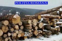 Peste 200 de m.c. de lemn au confiscat polițiștii din Beliș, din Mărgău