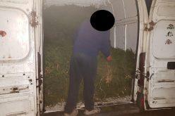 FOTO – Cetină de molid, fără acte, confiscată la Mănăstireni