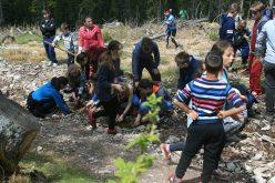 Peste 20 de mii de voluntari au participat la acțiunile de împădurire din această primăvară