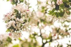 Cum va fi vremea de Paște la Huedin
