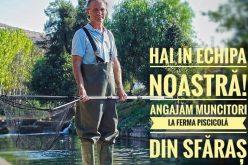 Păstrăvăria Sfăraș angajează muncitori piscicoli în ferma din Sfăraș, la 10 kilometri de Huedin (P)