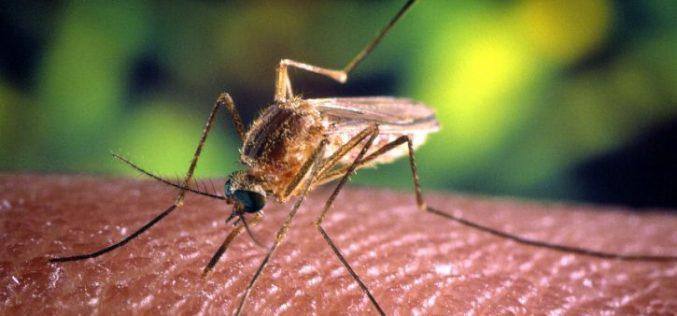 Cum ne ferim de virusul West Nile. Boala poate fi mortală