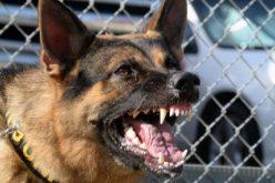 FOTO – Poștăriță mușcată grav de doi câini pe strada Stadionului din Huedin. Nu e primul caz, autoritățile locale dorm